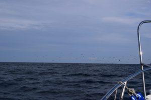 冠島の写真