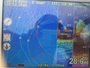 魚影発見の写真