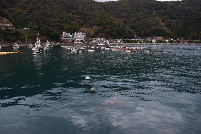 神子漁港突堤から内側を見た写真