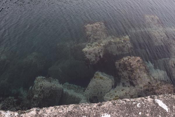 世久見漁港先端の海底