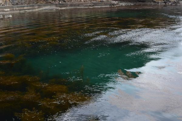 阿納漁港の藻の隙間