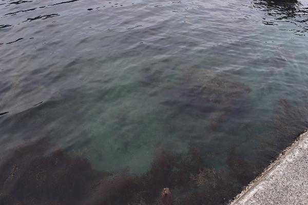 釣姫漁港大突堤付け根の海底