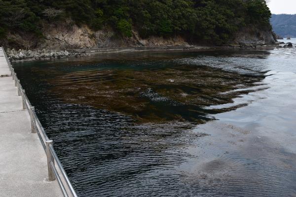 阿納漁港釣りを許可された場所