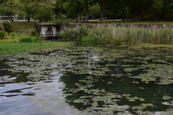 膳所城跡公園のワンド
