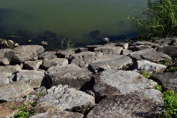 湖岸の写真