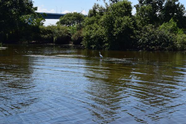 真野川河口の水鳥
