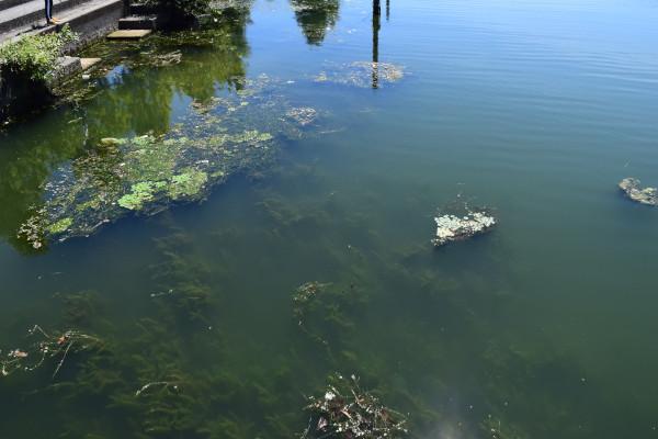 雄琴港の湖面