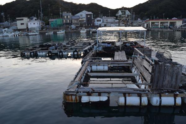小浜漁港内側小割