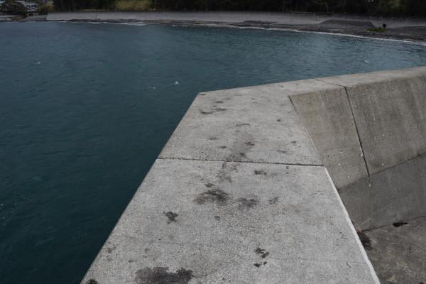 加尾漁港アオリイカポイント