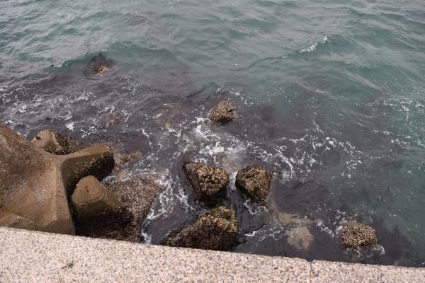 三尾川漁港先端